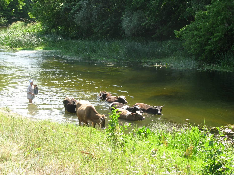 Фото летом купаются на речке 20 фотография